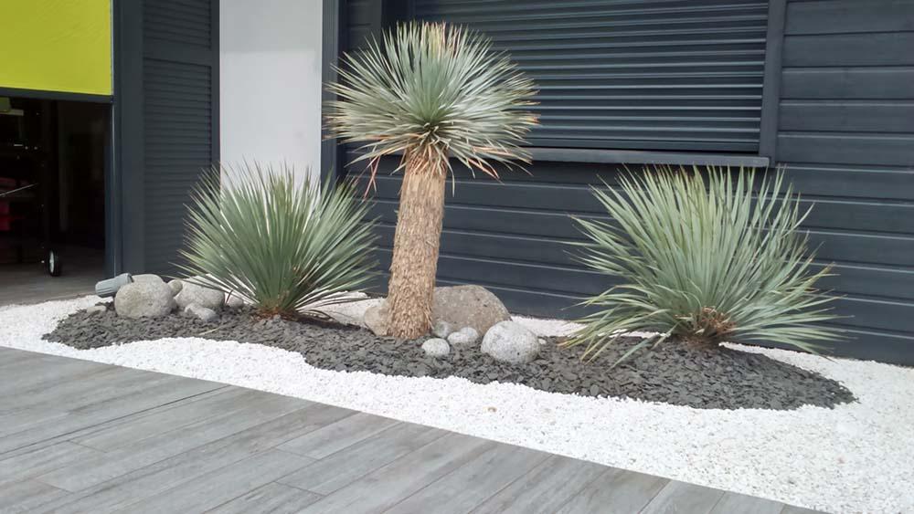 Am nagement ext rieur jardin capbreton seignosse bayonne for Yucca exterieur